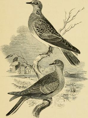 The_birds_of_Shakespeare_(1916)_(14732404266)